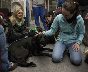 Sophomore hospitality management major Holly Ward, right, pets a therapy dog on Tuesday, Dec. 3. to help ease the stress caused by finals. (Anthony Viola NW)
